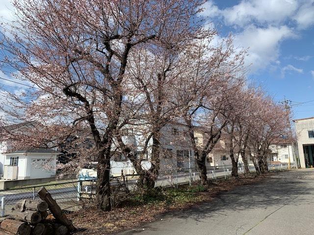 ゲストハウス南の桜。