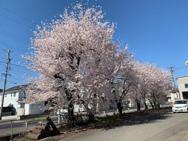長野の合宿免許に春が来た。