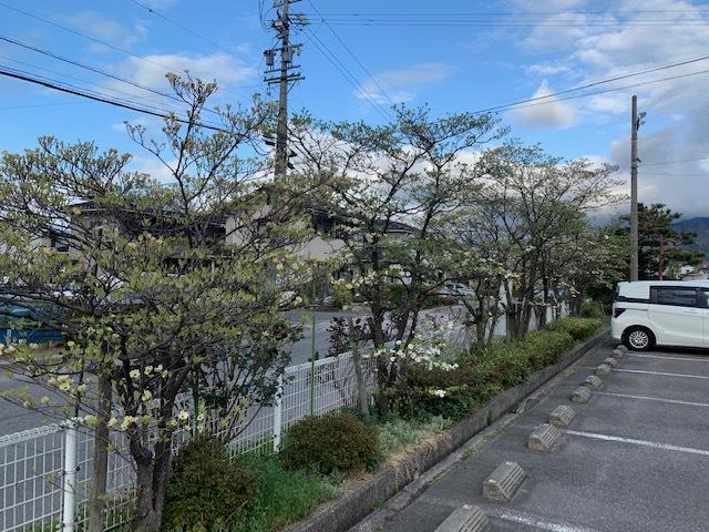 ゲストハウス北側花水木。