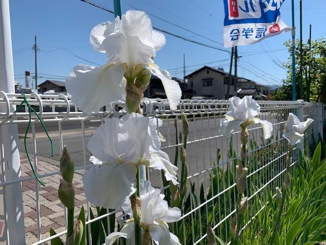 長野の合宿免許のゲストハウス、アイリス。