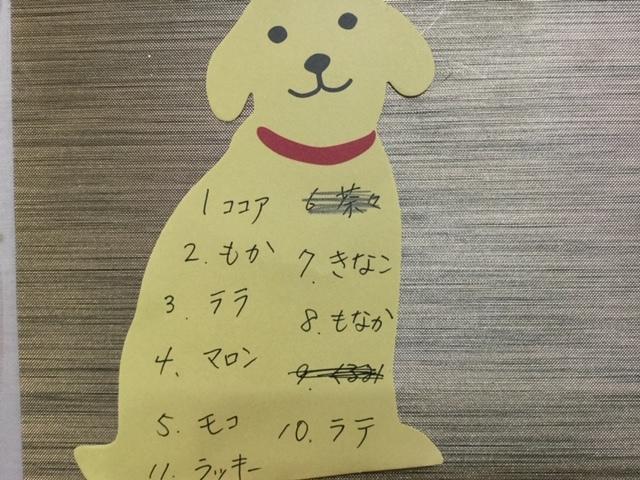 6月末から7月に新看板犬誕生!
