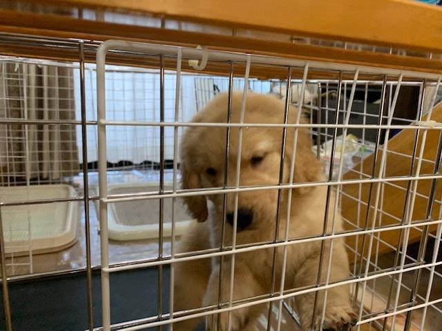 合宿免許の看板犬、ララちゃん、来ました!