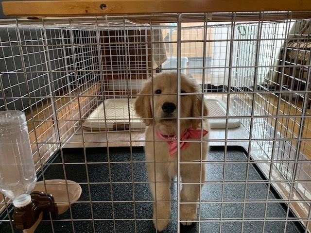 合宿免許の看板犬、ララ!