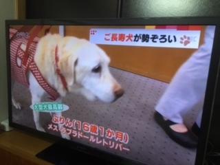 合宿免許の看板犬メリー!