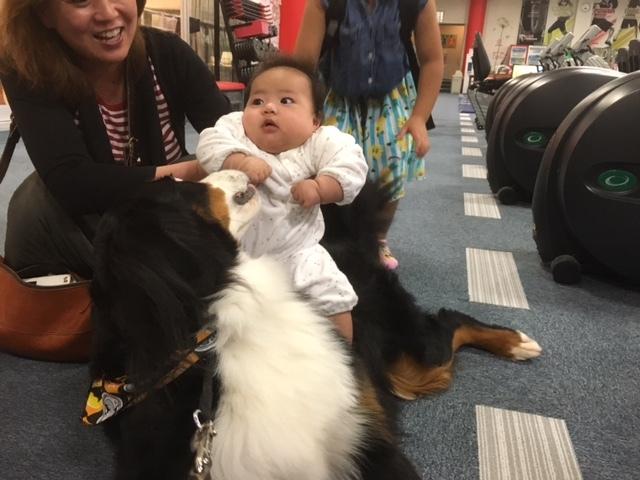 長野の合宿免許の看板犬、マックス君。