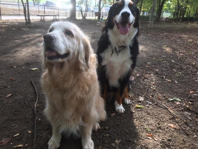 合宿免許の看板犬、メリー&マックス。