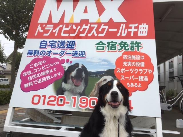 長野の合宿免許は看板犬が有名⁈