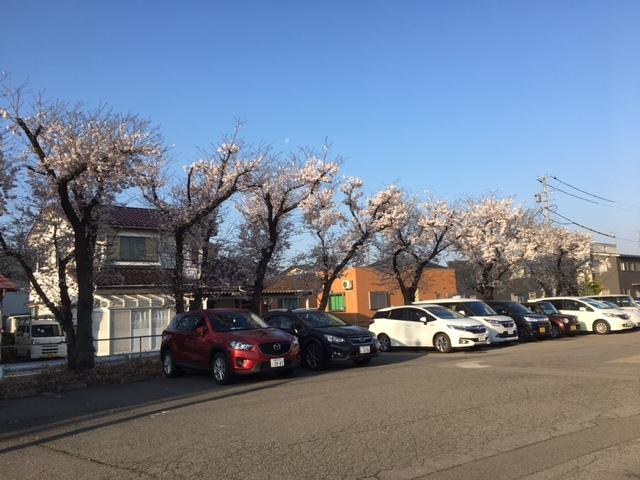 合宿免許は長野の桜が見ごろ。