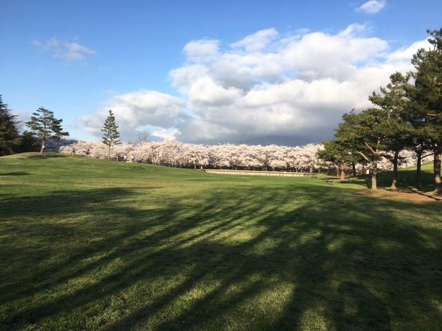 長野の合宿免許と桜満開。