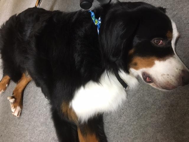 合宿免許の看板犬、マックス。