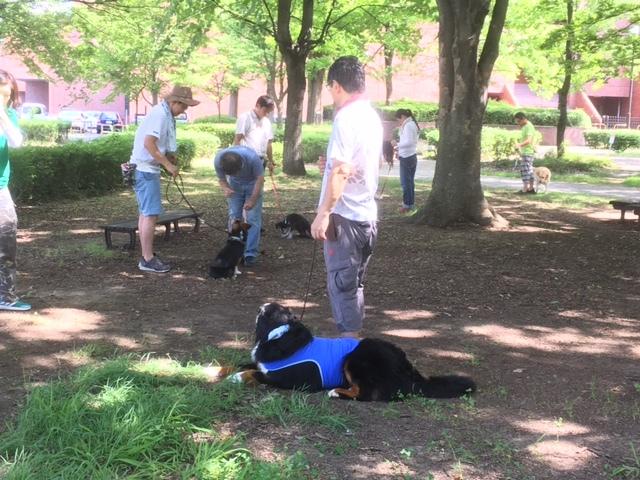 合宿免許の看板犬マックス。
