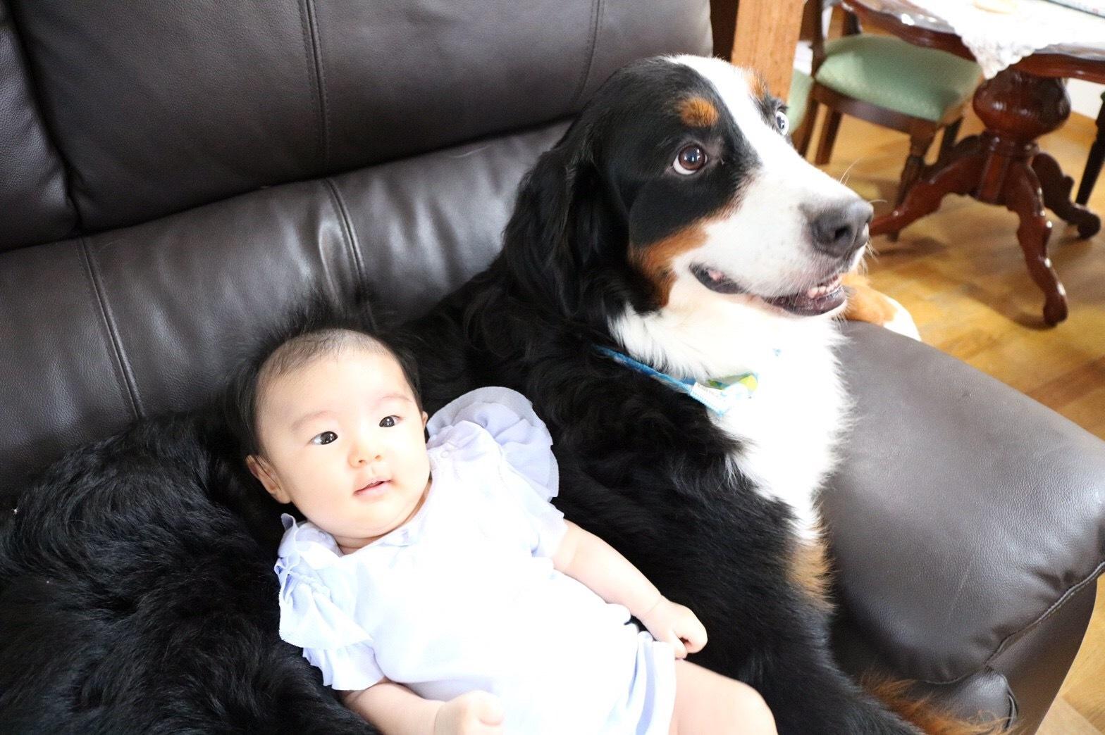 合宿免許の看板犬と赤ちゃん。