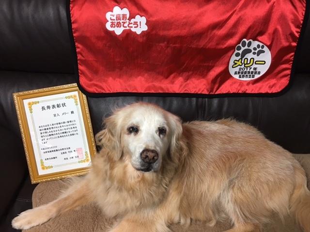 看板犬メリー、高齢犬表彰!