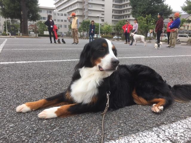 長野の合宿免許の看板犬、マックス。