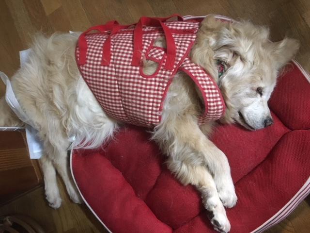 長野の初代合宿免許の看板犬。