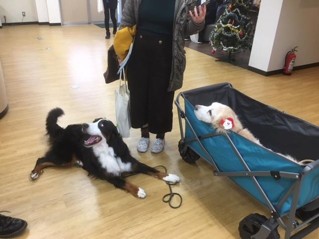 長野の合宿免許の2匹の看板犬。