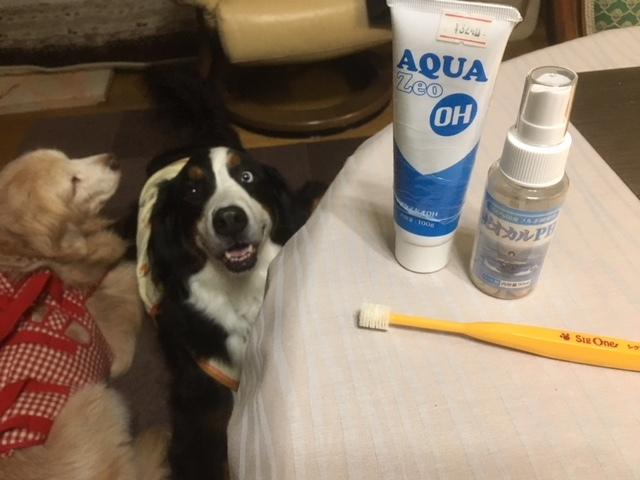 歯磨きは大切。