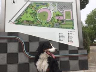 長野市合宿免許のゲストハウスから近い南長野運動公園。