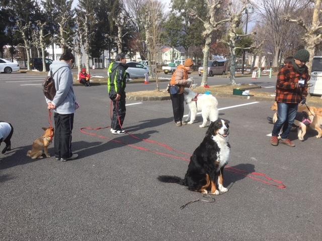 長野の合宿免許の看板犬。