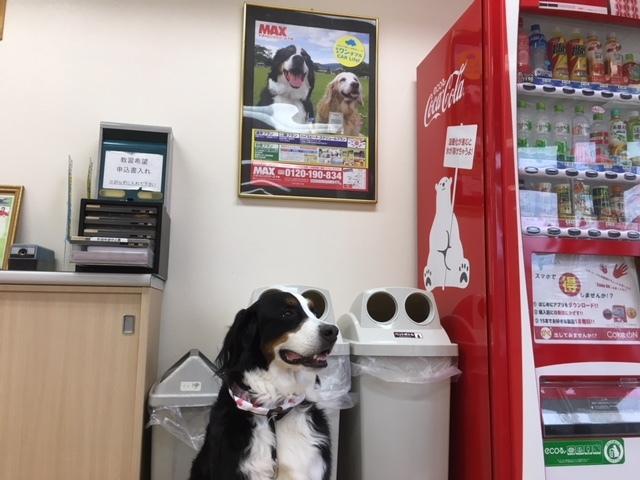 合宿免許の看板犬。