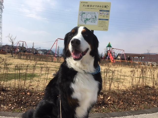 犬が散歩出来る公園。