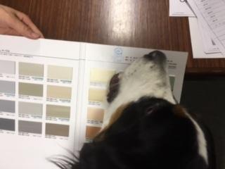 合宿免許の看板犬のマックス君の仕事。