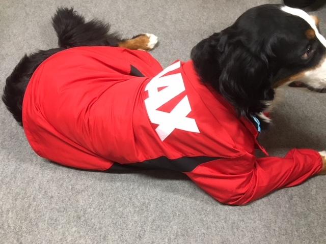 新犬指導員。