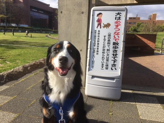 今が格安、長野の合宿免許。