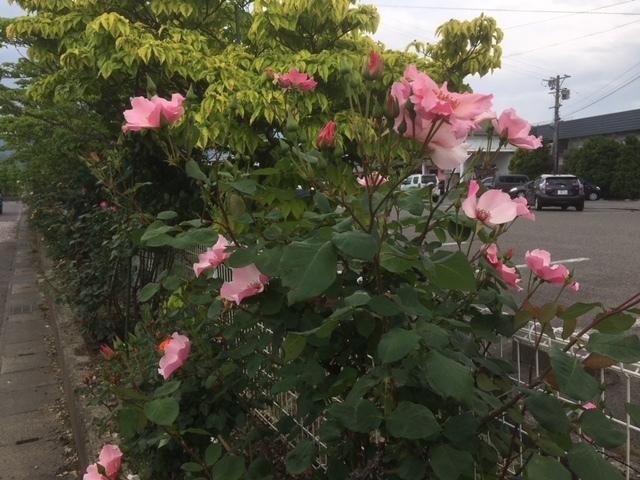 長野も梅雨になりました。