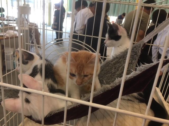 長野市保健所猫の譲渡会。
