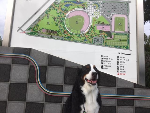 合宿免許ゲストハウスに近い、長野市オリンピックスタジアム。