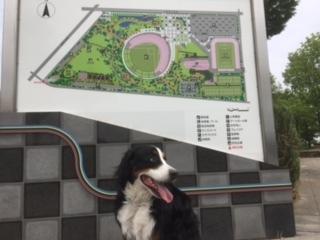 合宿免許ゲストハウスの周辺には南長野運動公園。