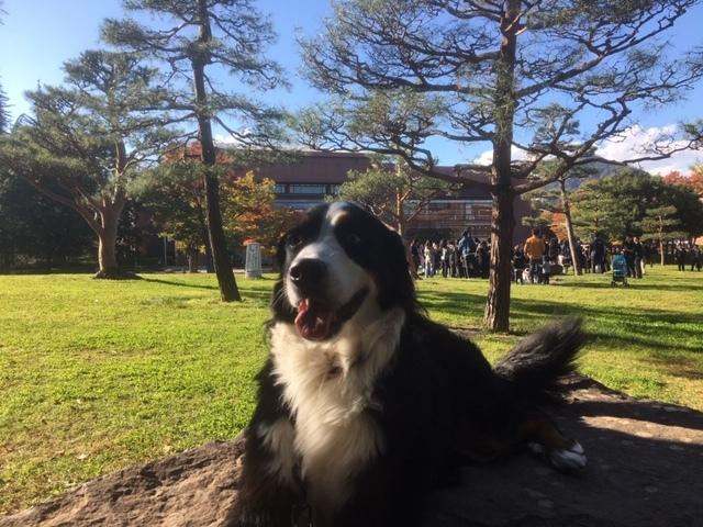 看板犬のマックス君、若里公園で営業中。
