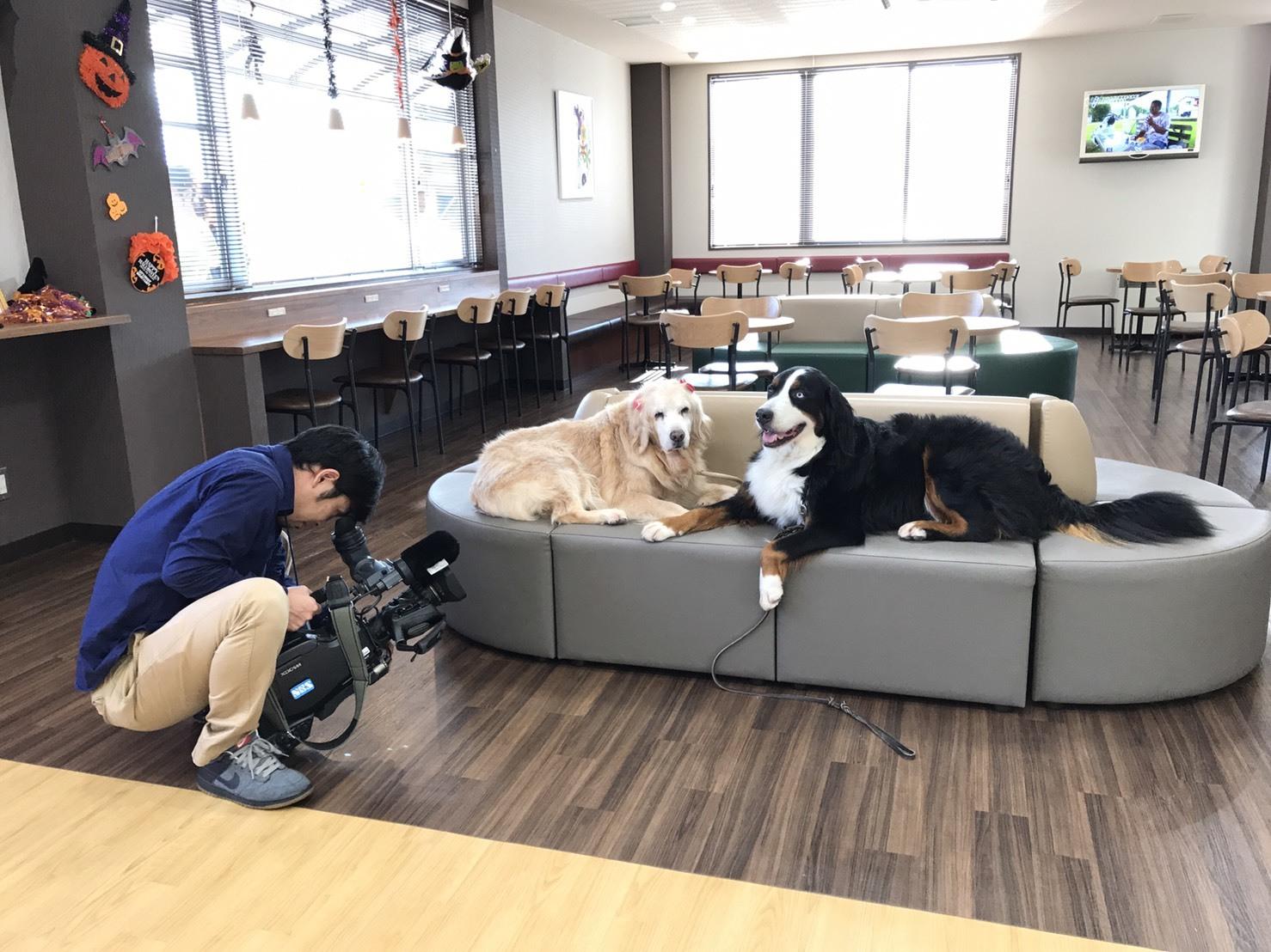 長野の合宿免許の看板犬、マックス!