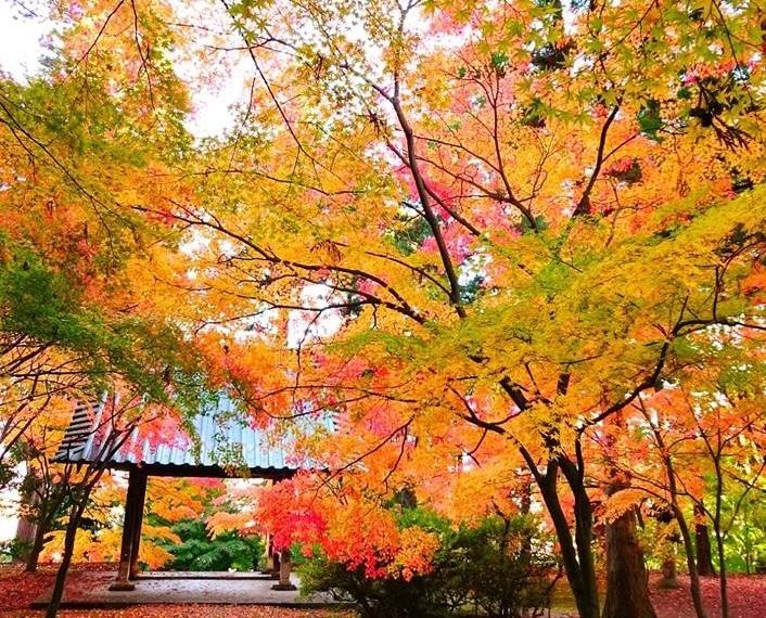 長野の紅葉、秋も深まっていく。