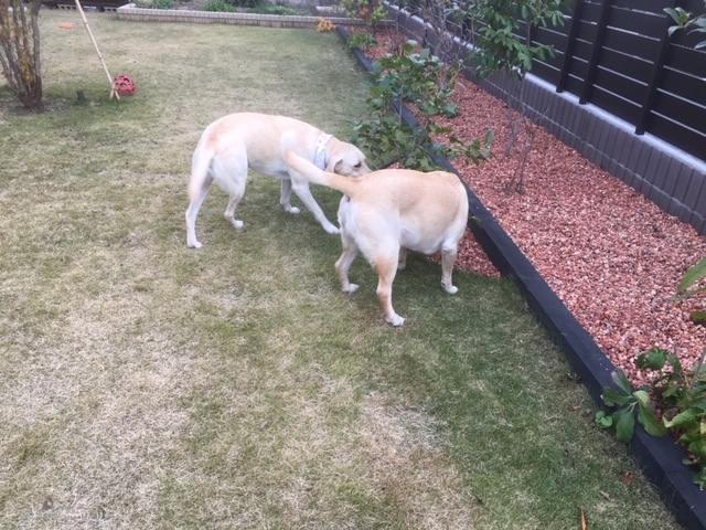 ドックランの後は知合いのお庭でワイワイ。