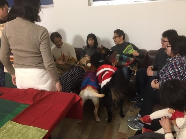 犬のクリスマスパーティーの後。
