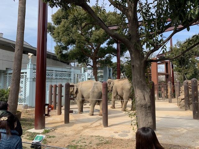 24日上野動物園無料開放。